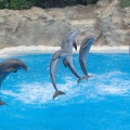 Amazing Footage of a Dolphin Cove