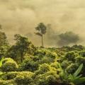 Der Amazonas brennt: Das steckt wirklich dahinter