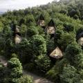 Wild, wundervoll und nachhaltig: Die Dawson Lake Tree Houses