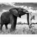 12 Natural Wonders in Afrika von Paul Giggle